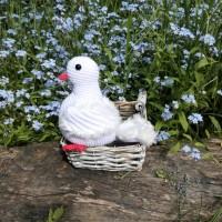 Голубь белый свадебный